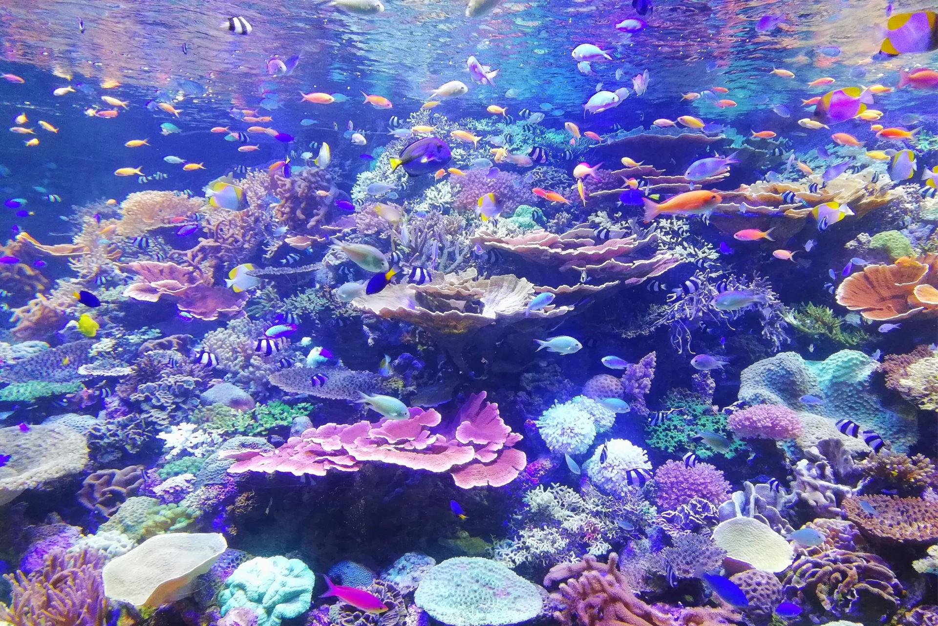 fishvariety