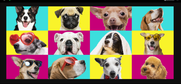 image of zoom meeting featuring several different breeds of dogs on colorful background